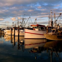 Where Should You Go Fishing In Australia?